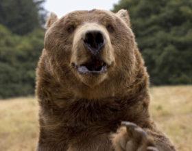 Lakossági felhívás: Medve